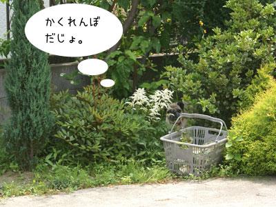 お庭でかくれんぼ