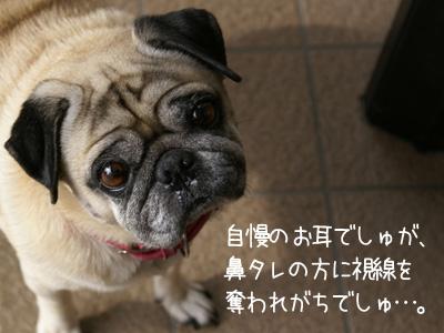 お耳check!!
