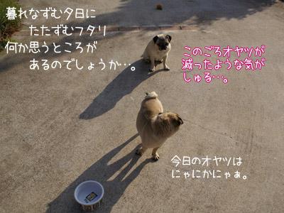 今日はりゃんちゃんサービスデー!!