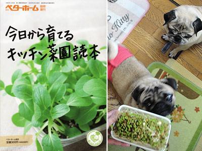 ベターホーム協会「今日から育てるキッチン菜園読本」