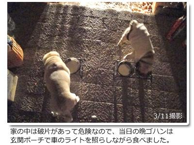 2011.3.11 東北関東大震災発生時の涼々とボビたん