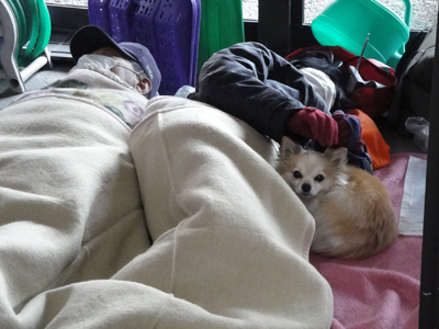 およそ寝るには最悪のスペースであろう自動ドア横で眠る飼い主さんを守る、気丈なワンちゃん