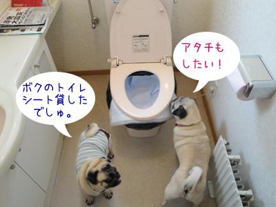 わんこ用トイレシートは非常用トイレに使えますか?