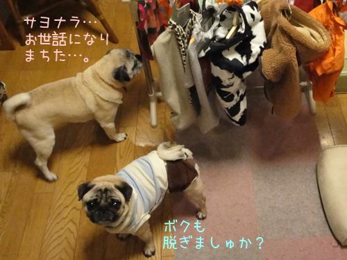 3.11被災犬へお洋服を!~ボビたん、気持ちだけで充分よん!