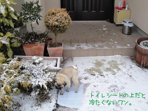 雪の上にトイレシートを敷くと
