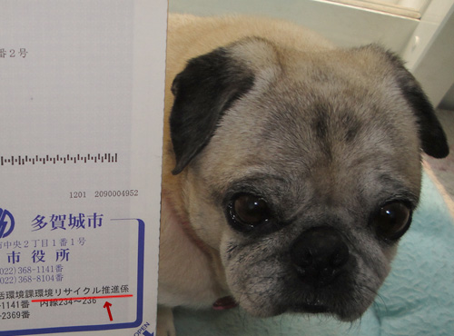 多賀城市の狂犬病予防注射のお知らせハガキ