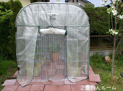今年のりゃんぼび菜園は「雨ニモマケズ」、デス。