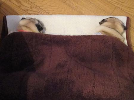 毛布の中は♥のまま