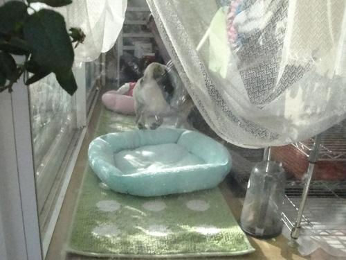オカエリ~のダッシュ