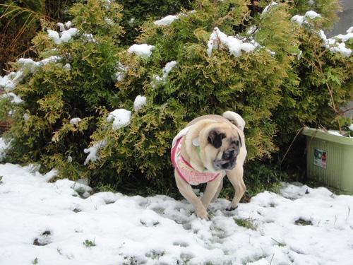 雪の上でもクルクル回れるようになったボビたん