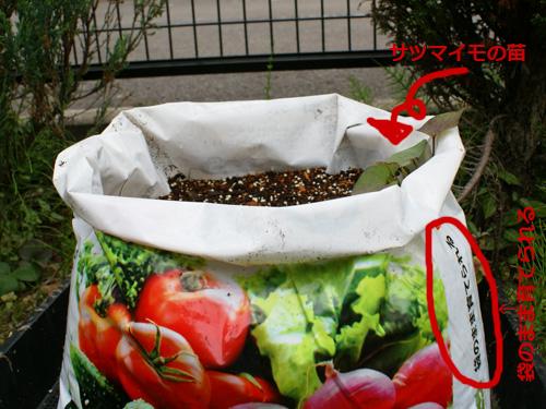 サツマイモの袋栽培