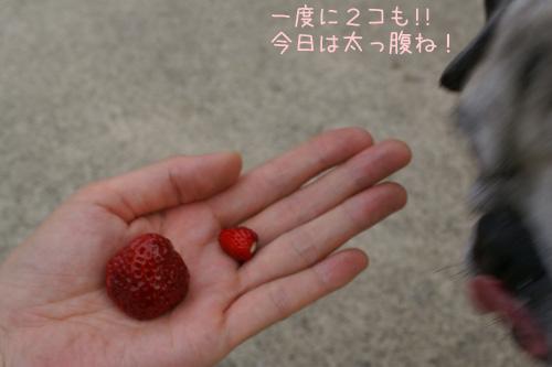 イチゴが2種類!