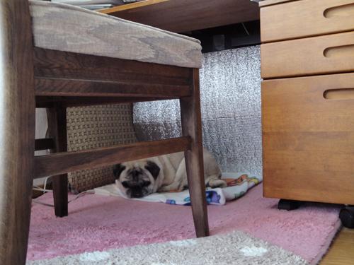 足元でお昼寝するボビたん